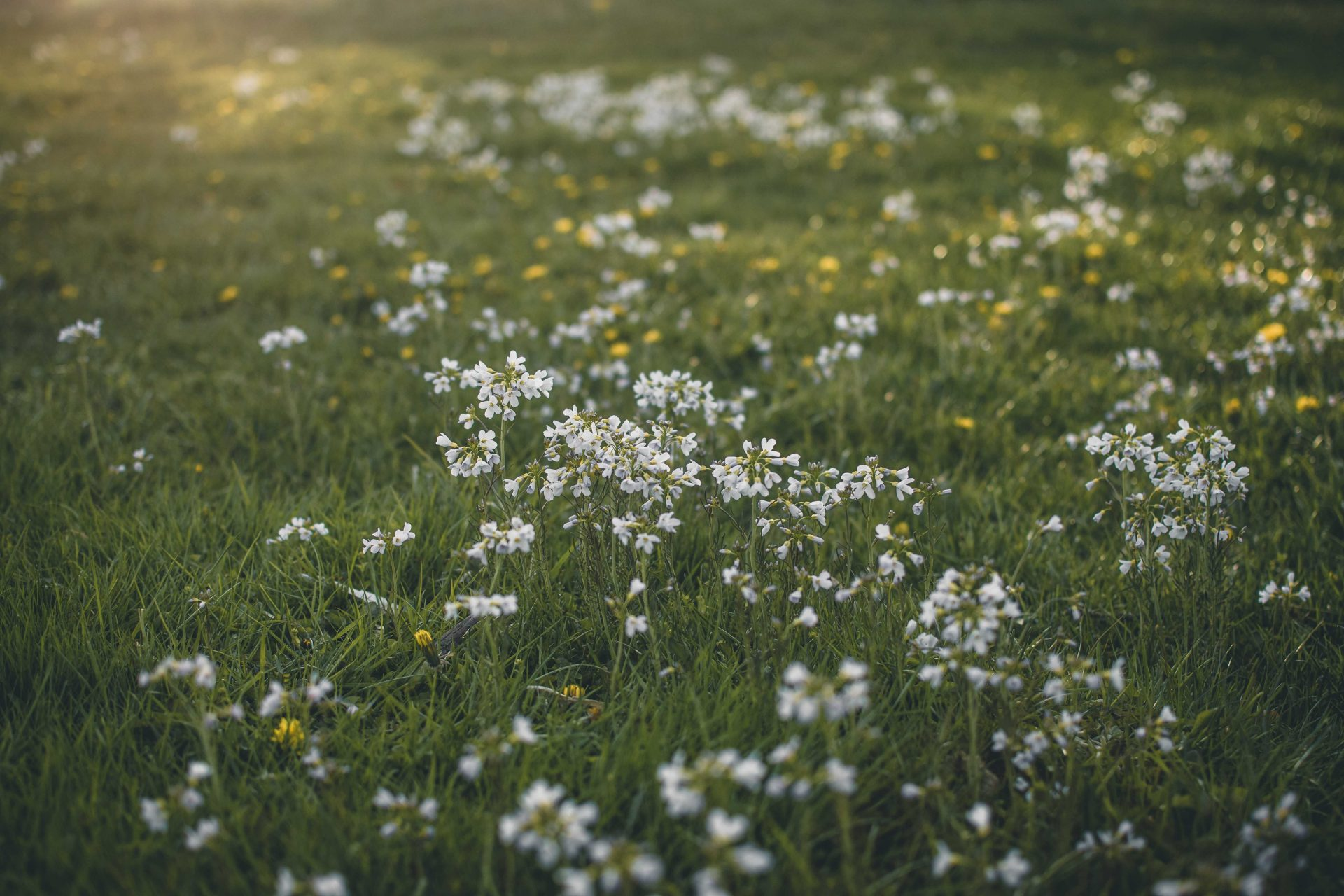 wiosna Norwegia
