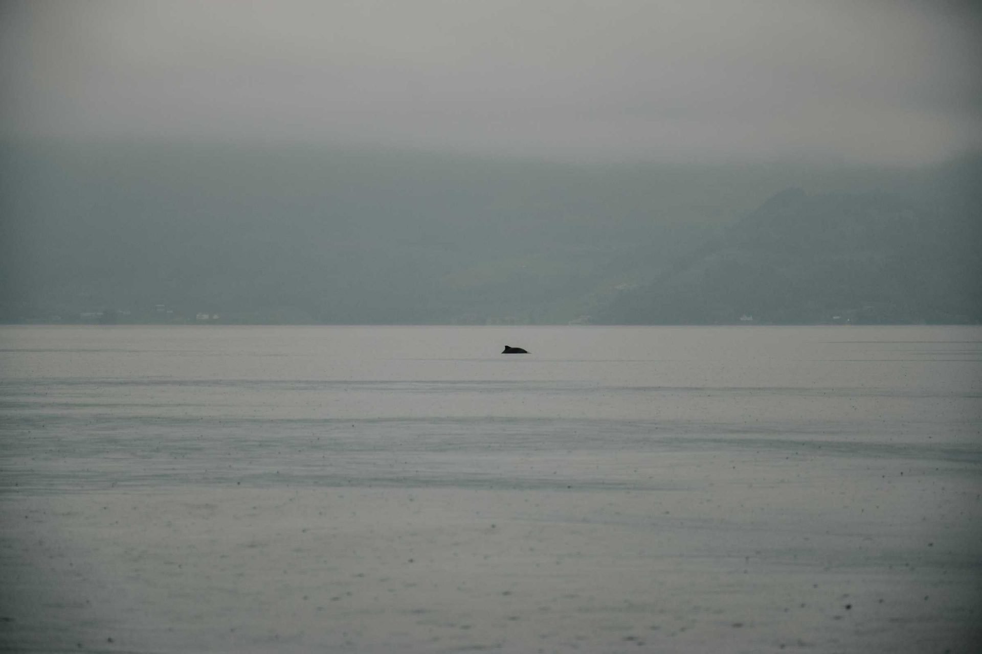 delfiny wNorwegii