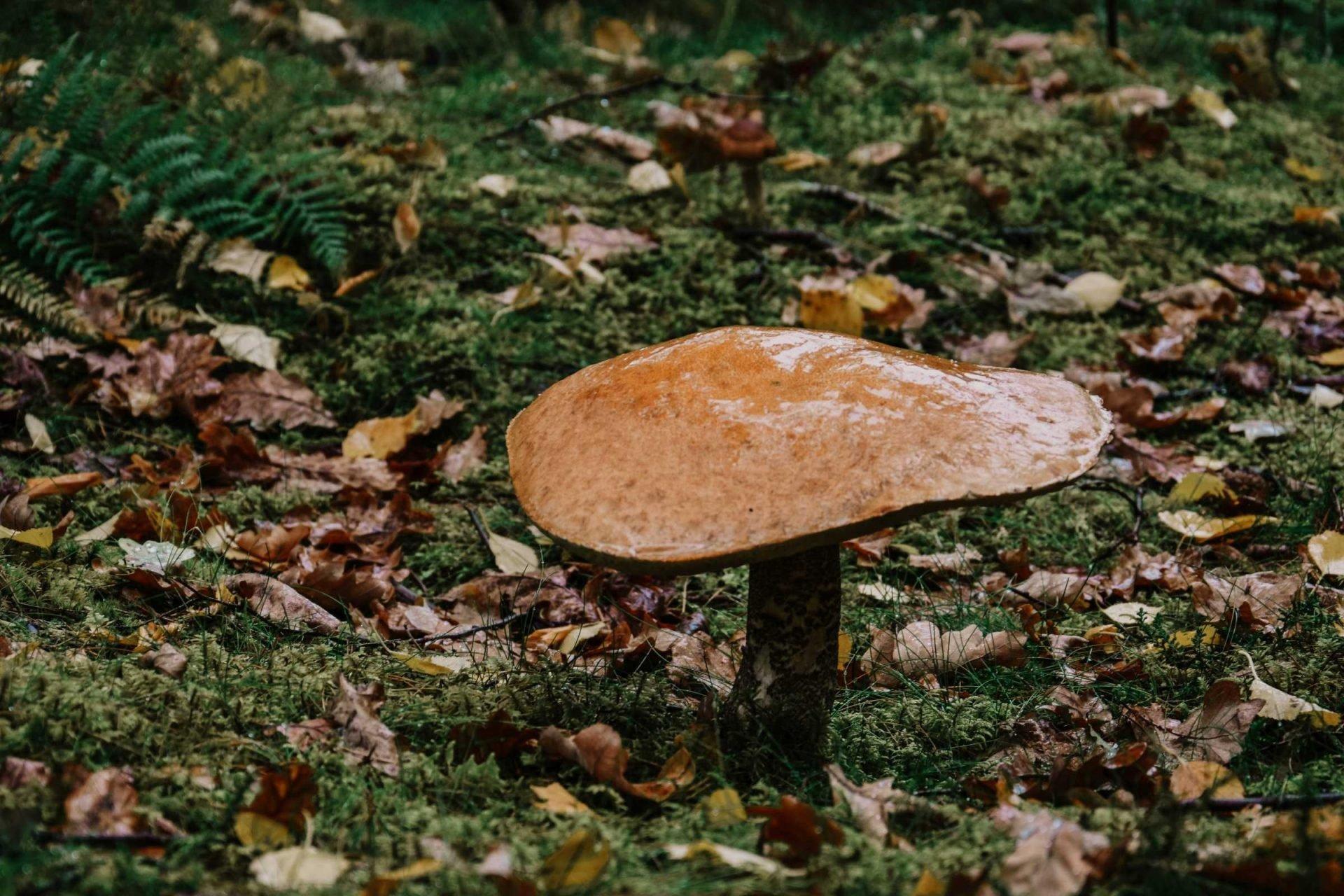 grzyby wNorwegii