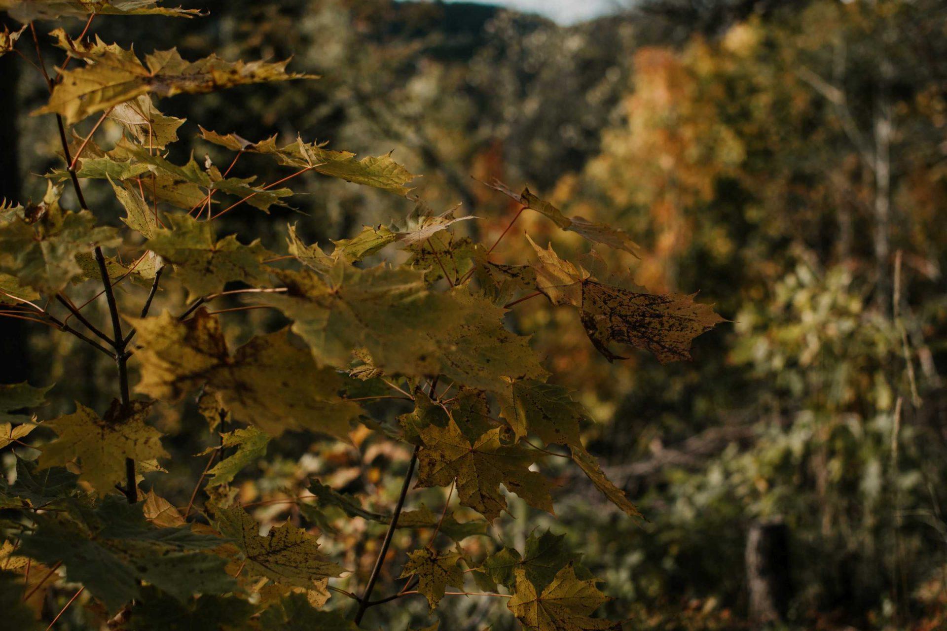 Jesień wNorwegii