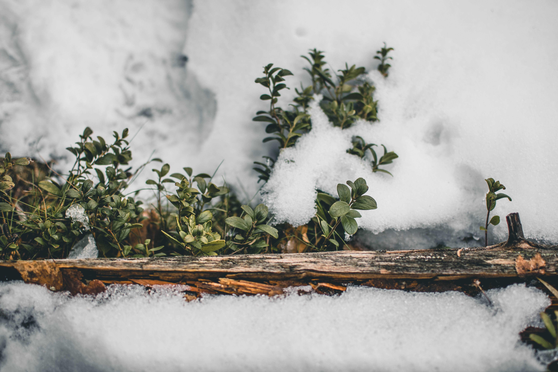 Czy warto wybrać się zimą doNorwegii?