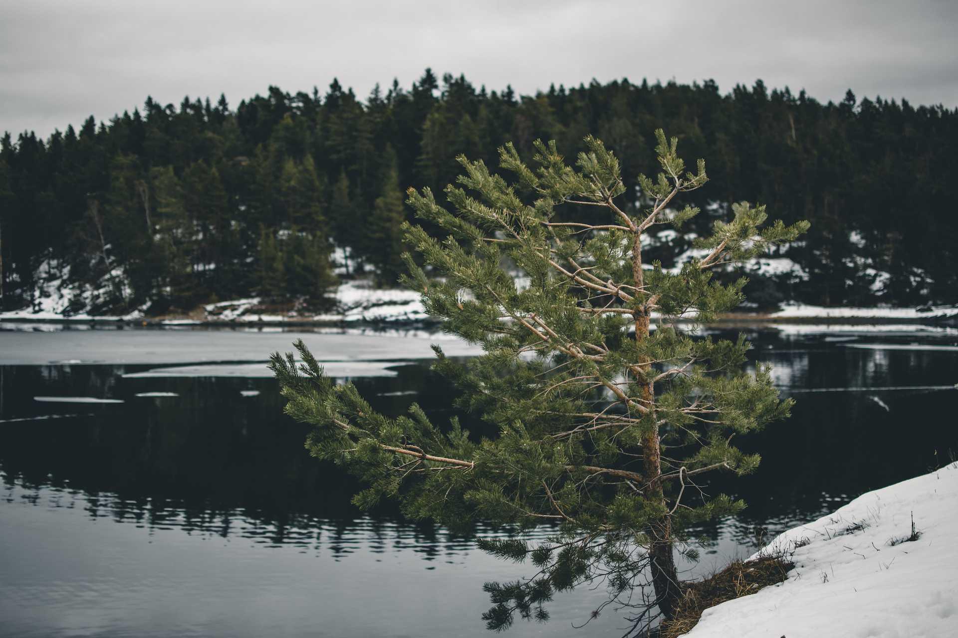 lasy wNorwegii