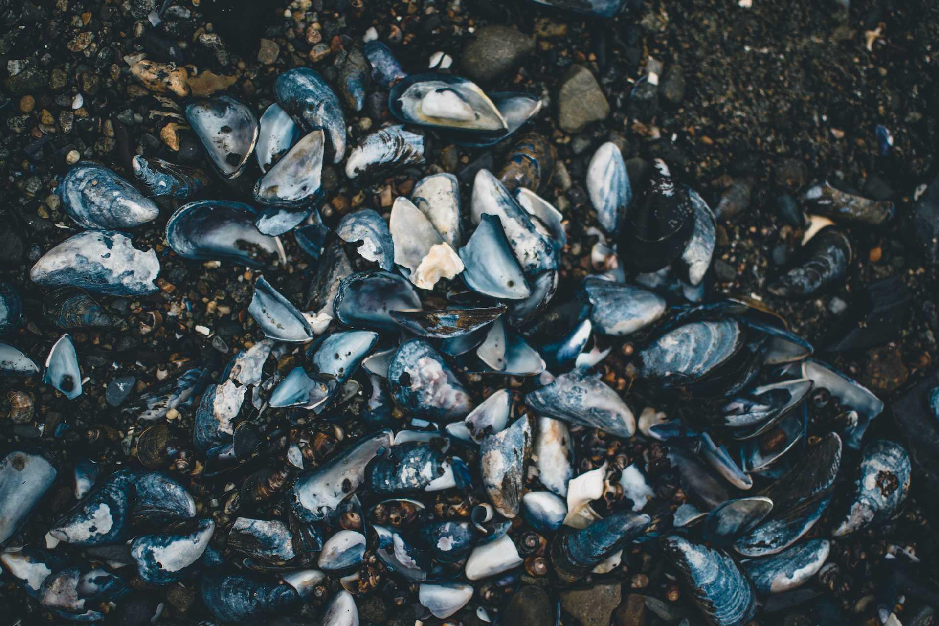 norweskie owoce morza