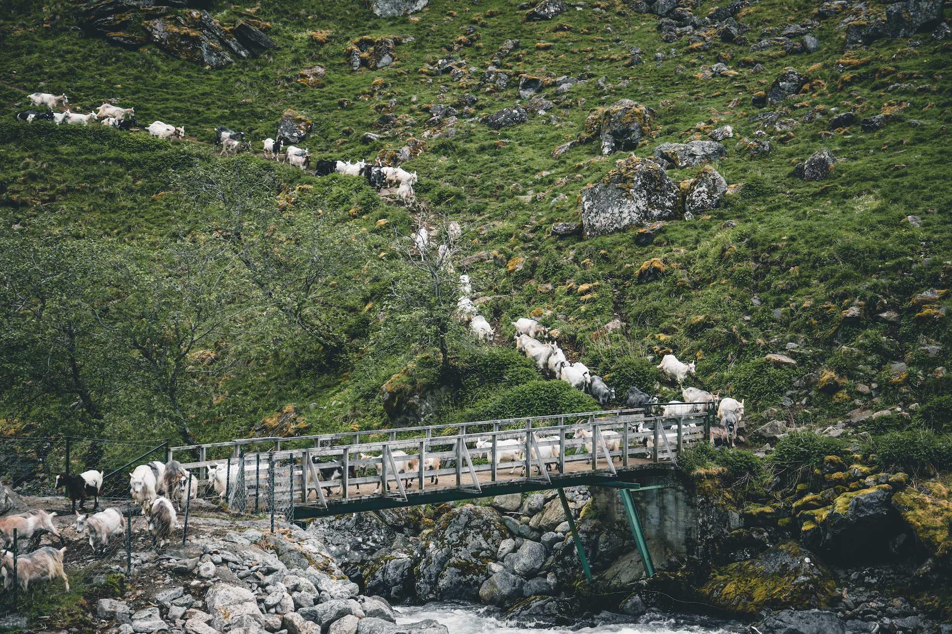 kozy wNorwegii