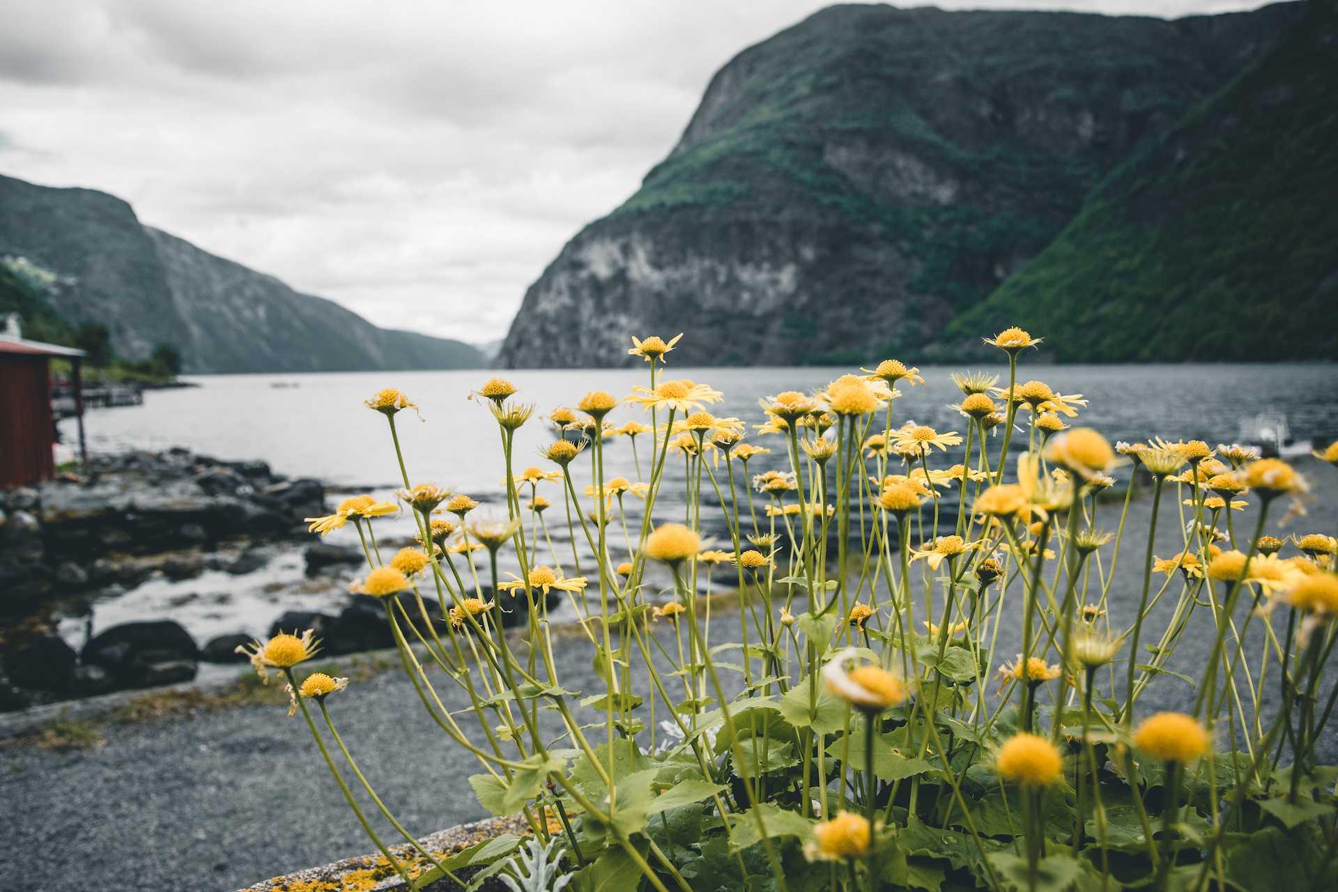 Klimatyczne miasta wNorwegii