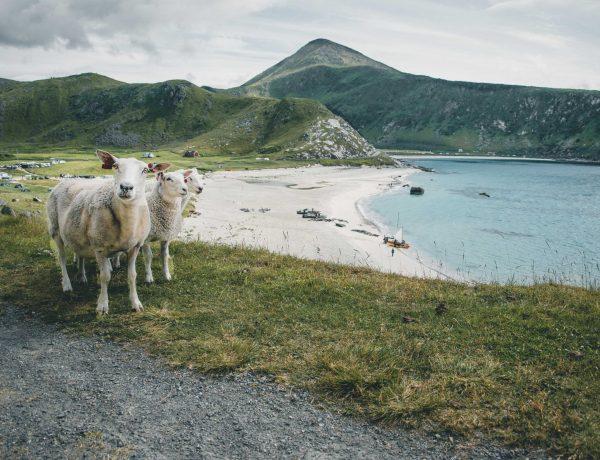 plaże na Lofotach