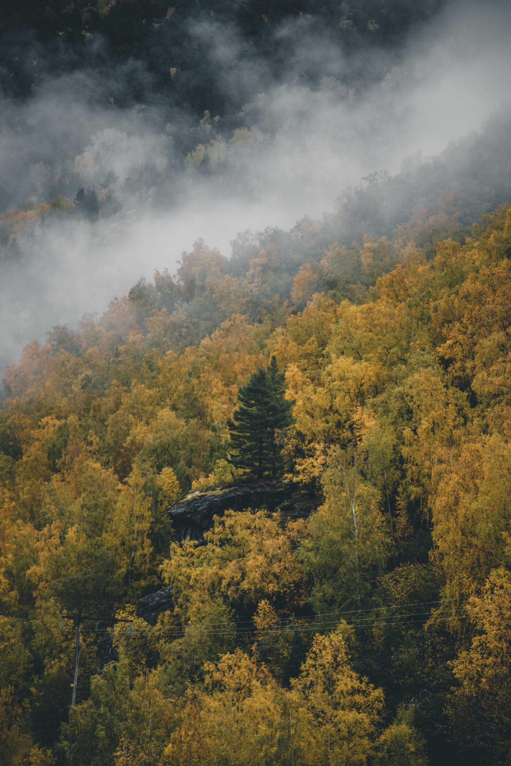 jesienna Norwegia