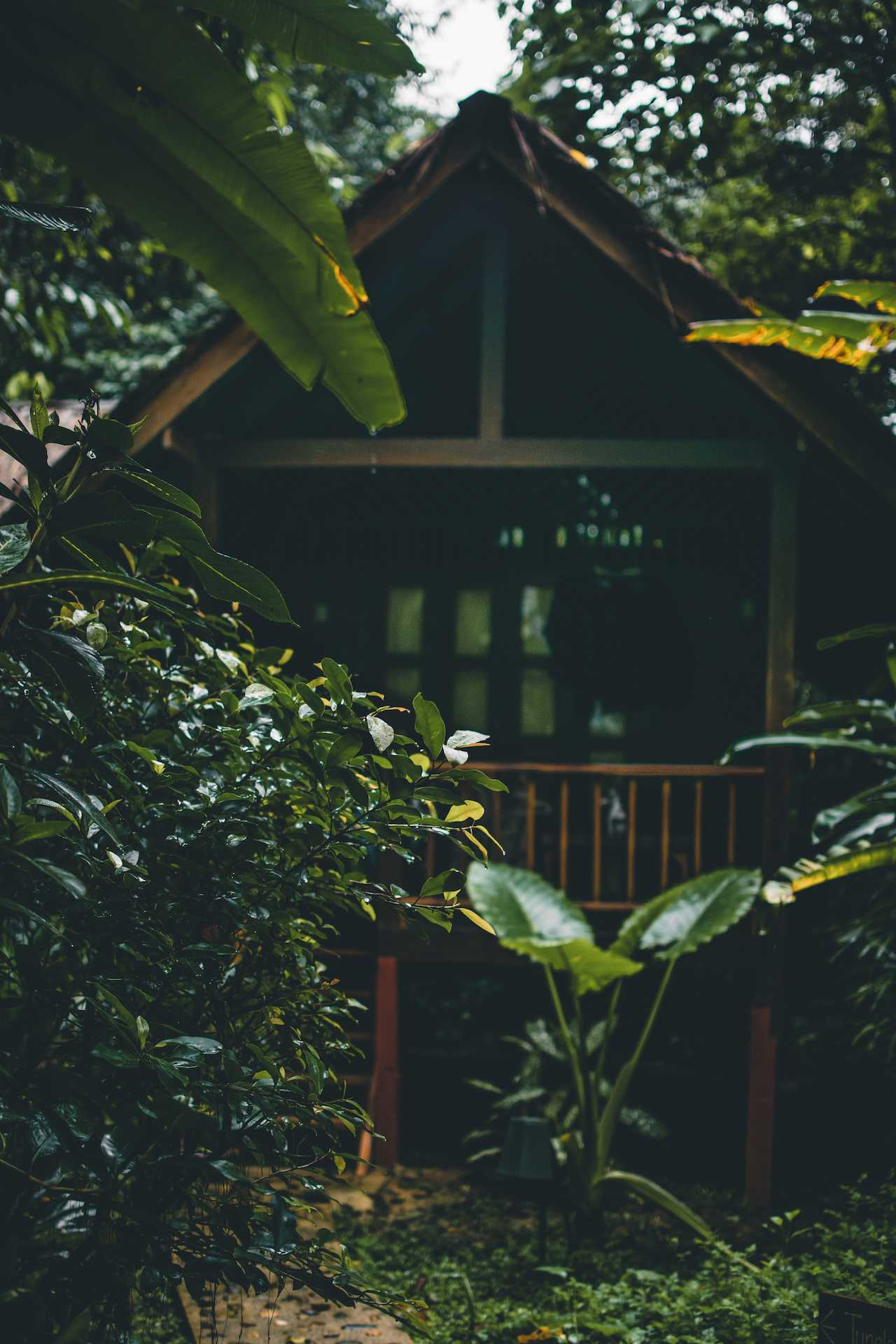 nocleg wdżungli