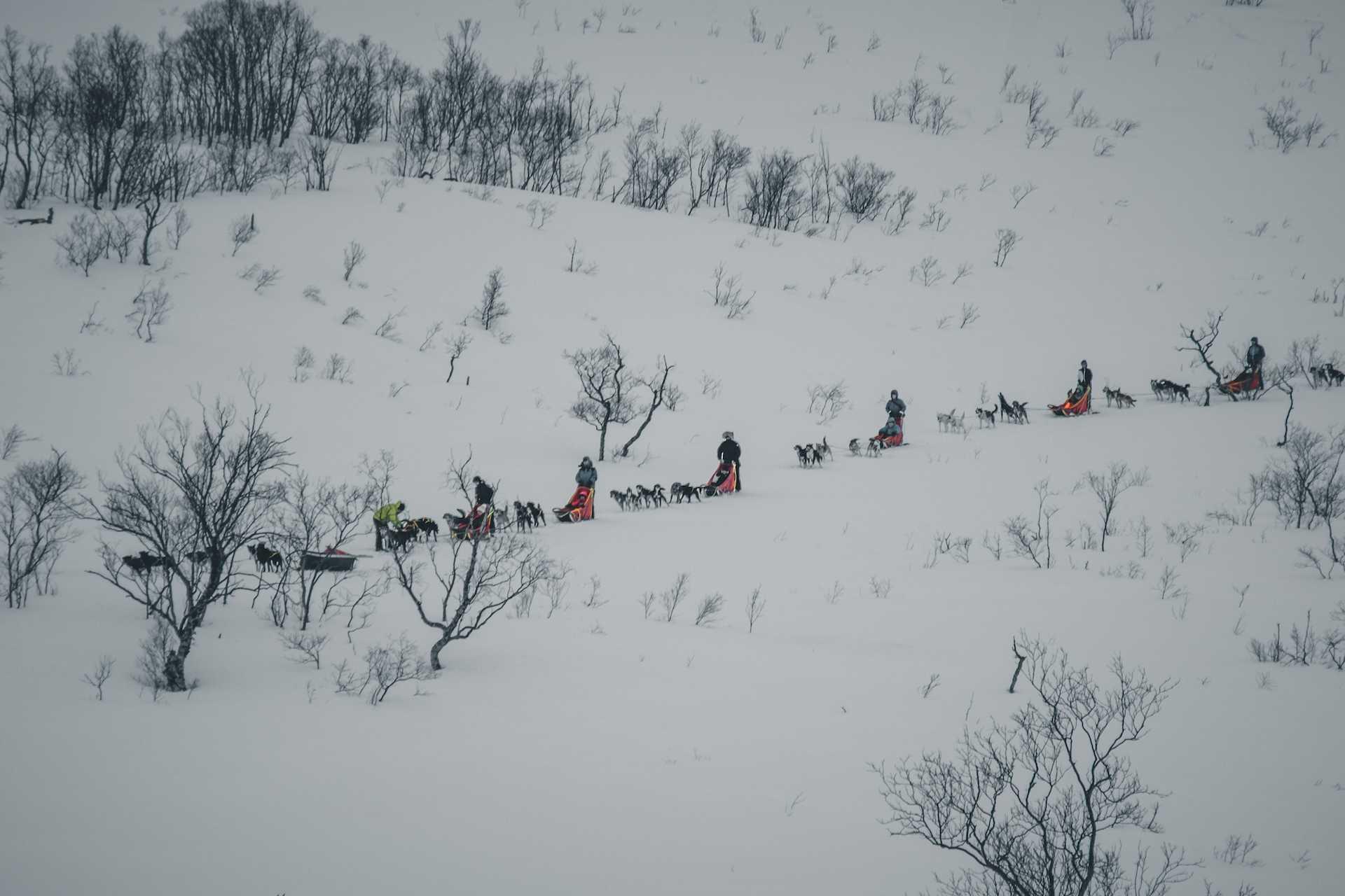 psie zaprzęgi Norwegia