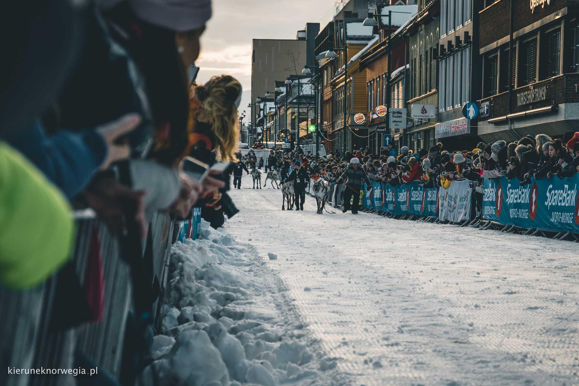 wyścigi renifery Tromso