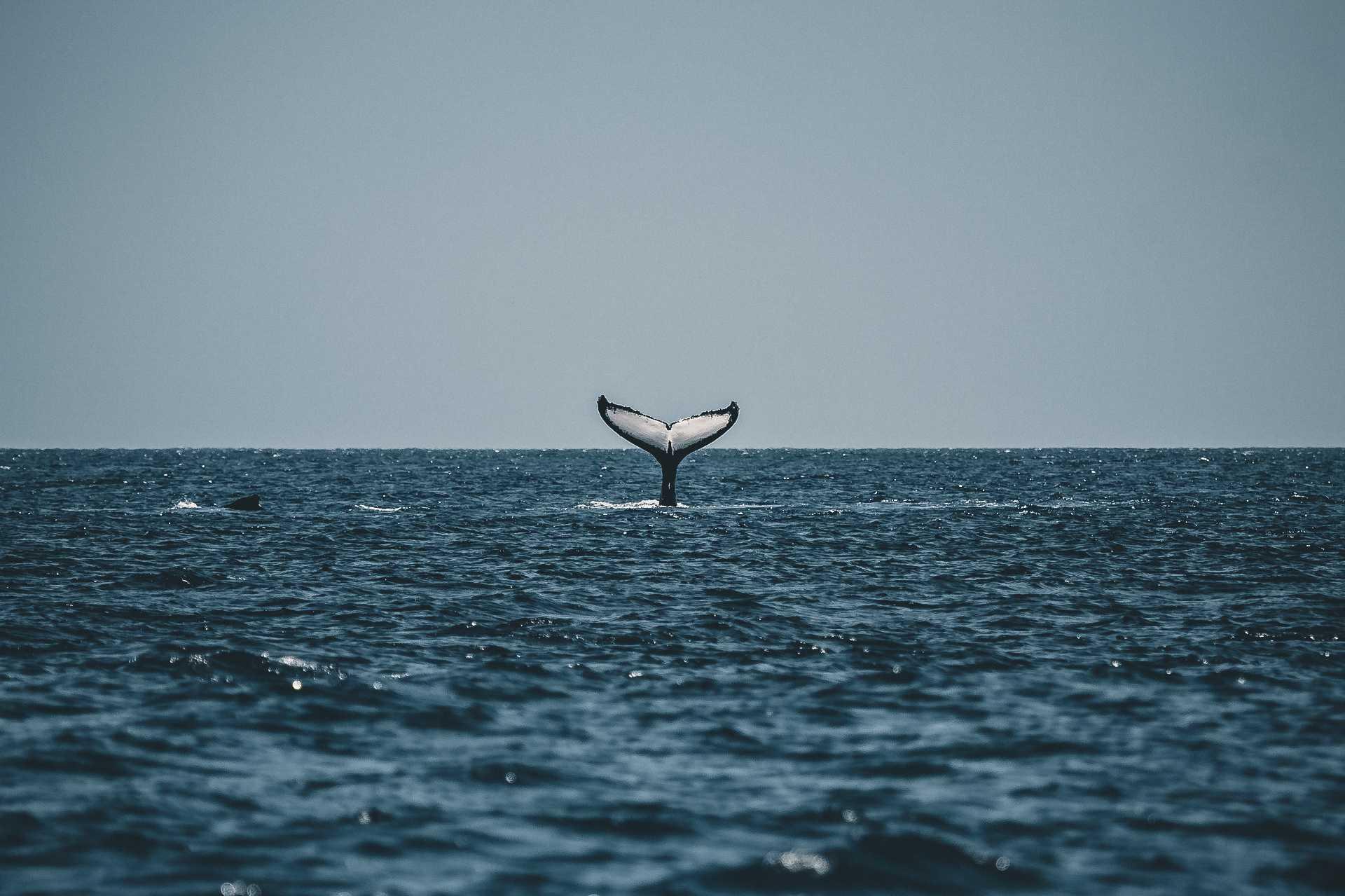 wieloryby wNorwegii