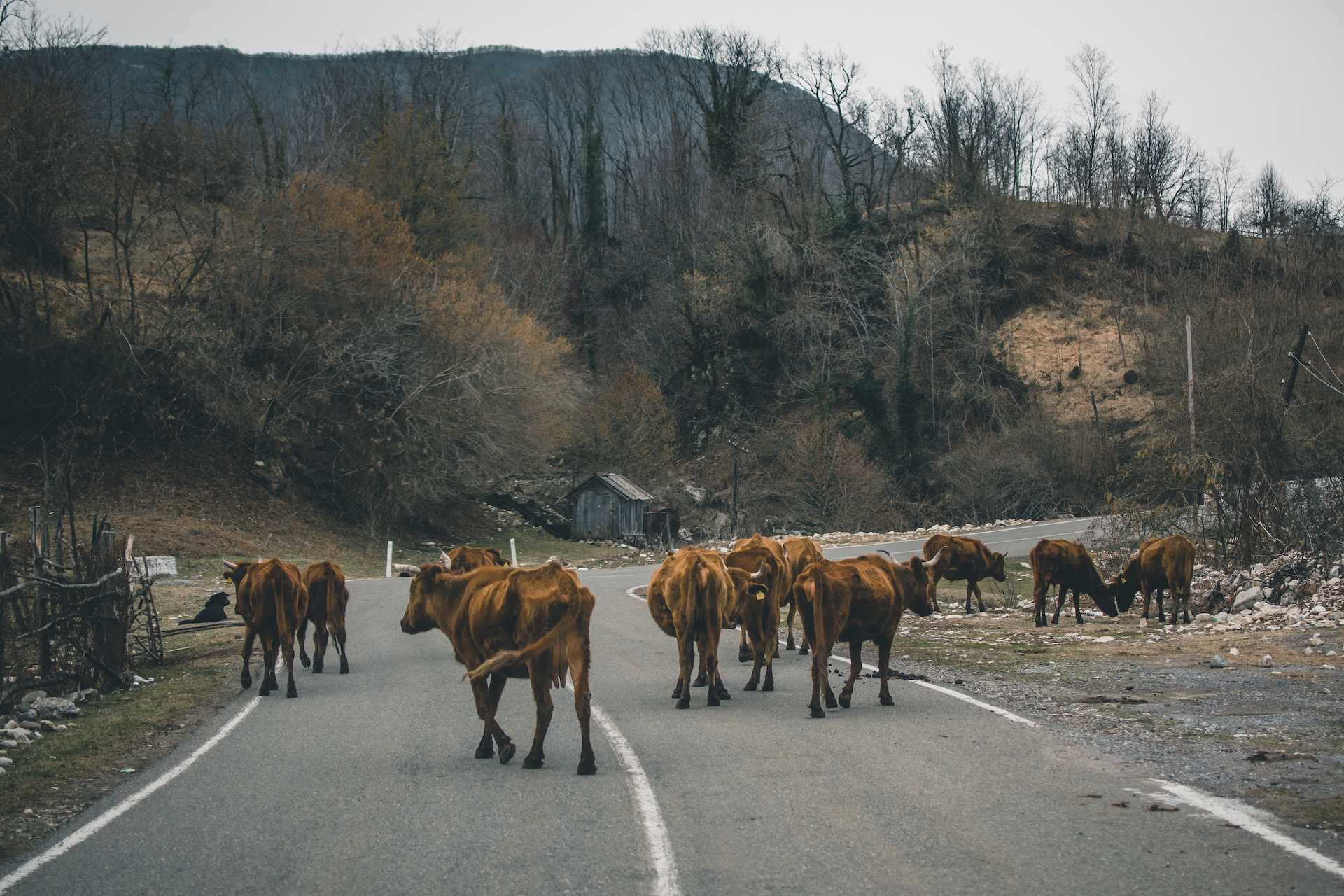 drogi wGruzji