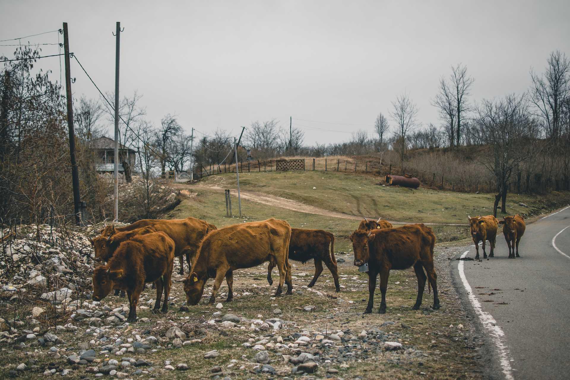 zwierzęta Gruzja