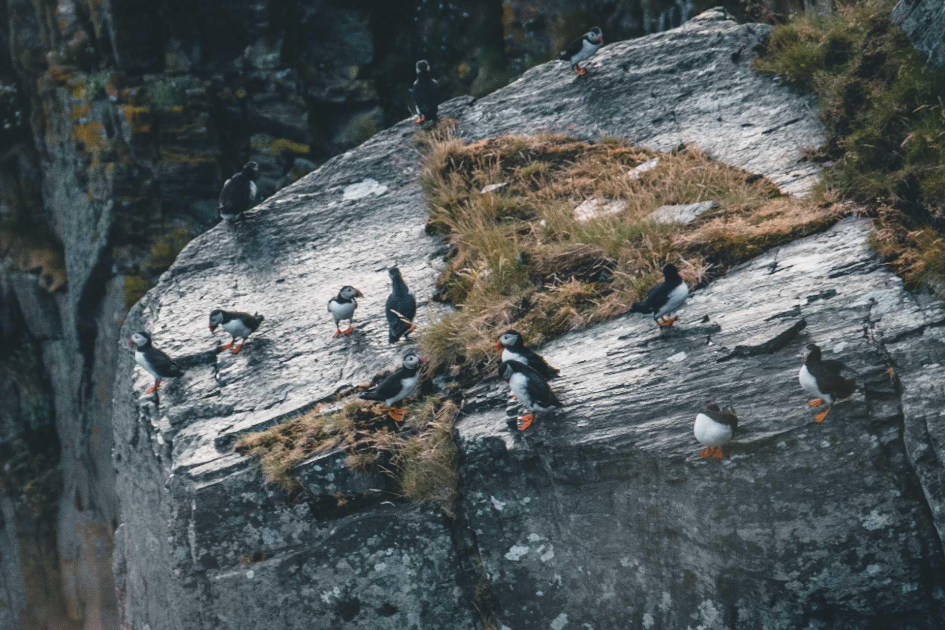 maskonury wNorwegii