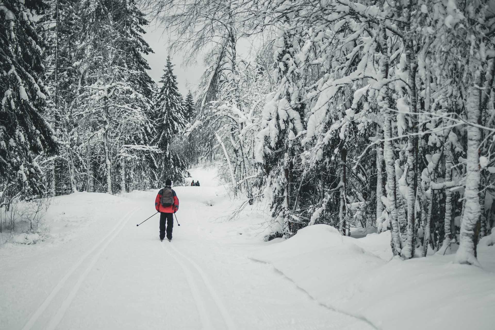 zaśnieżone drzewa