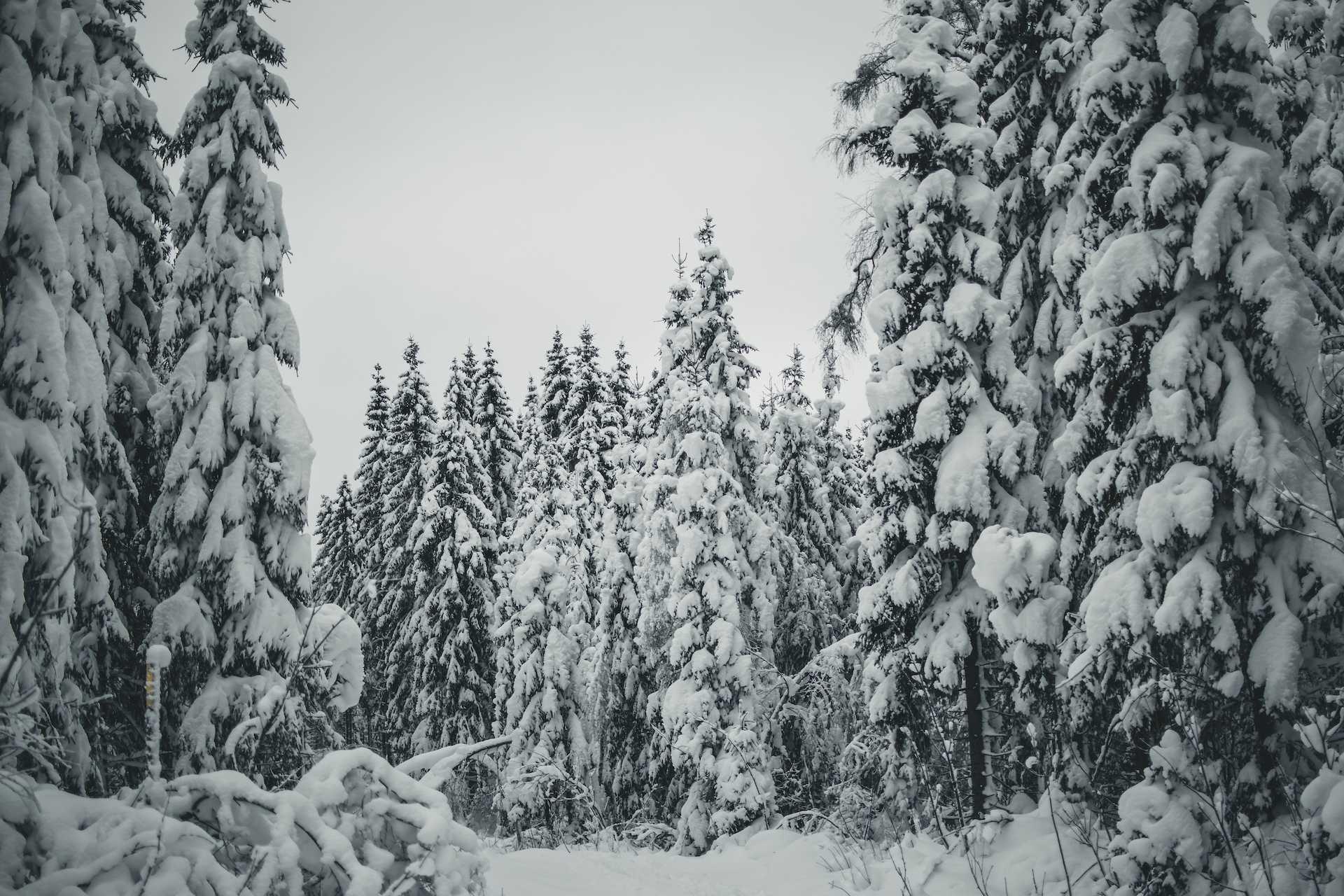 zima Oslo