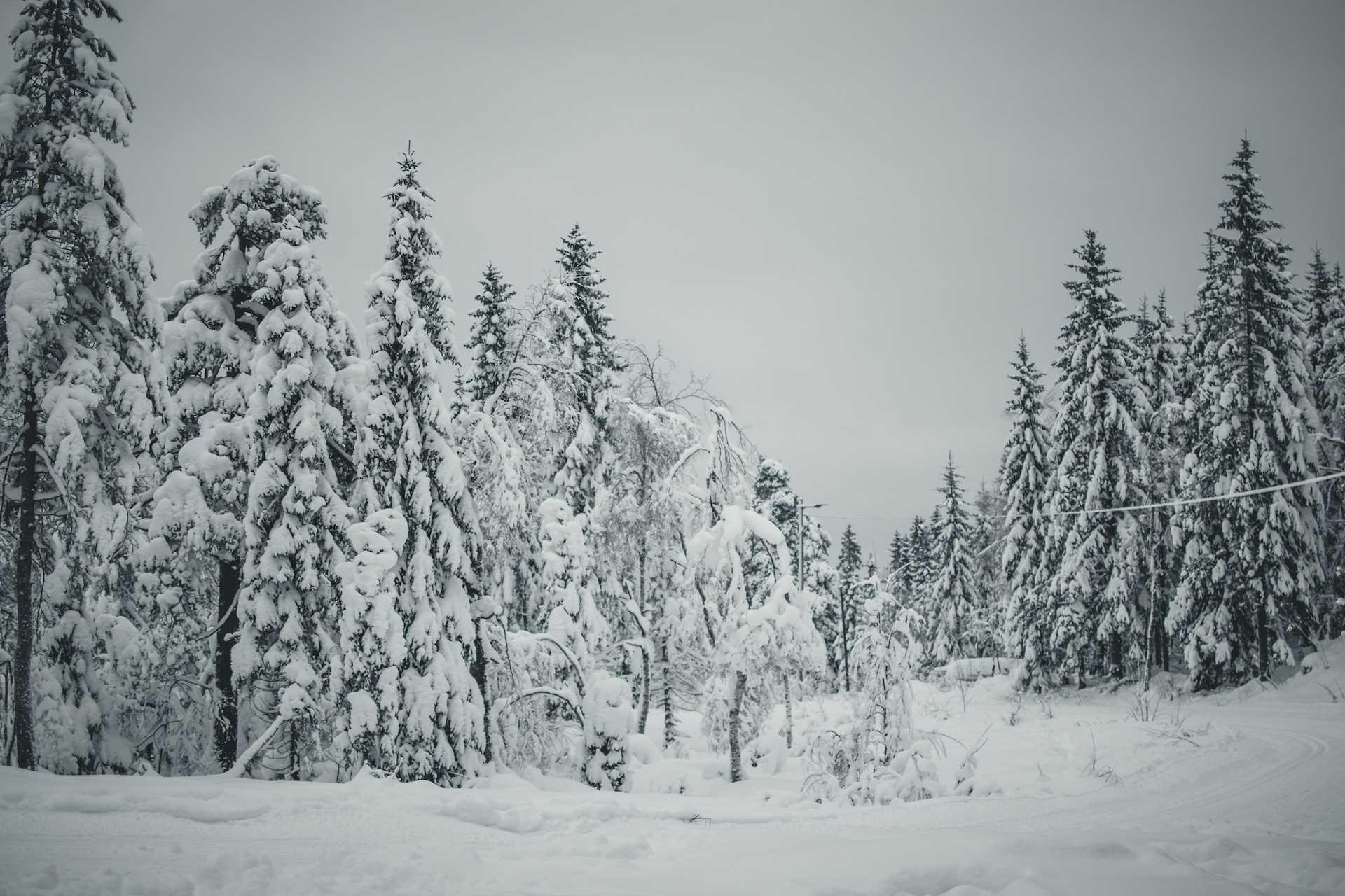 zima wOslo