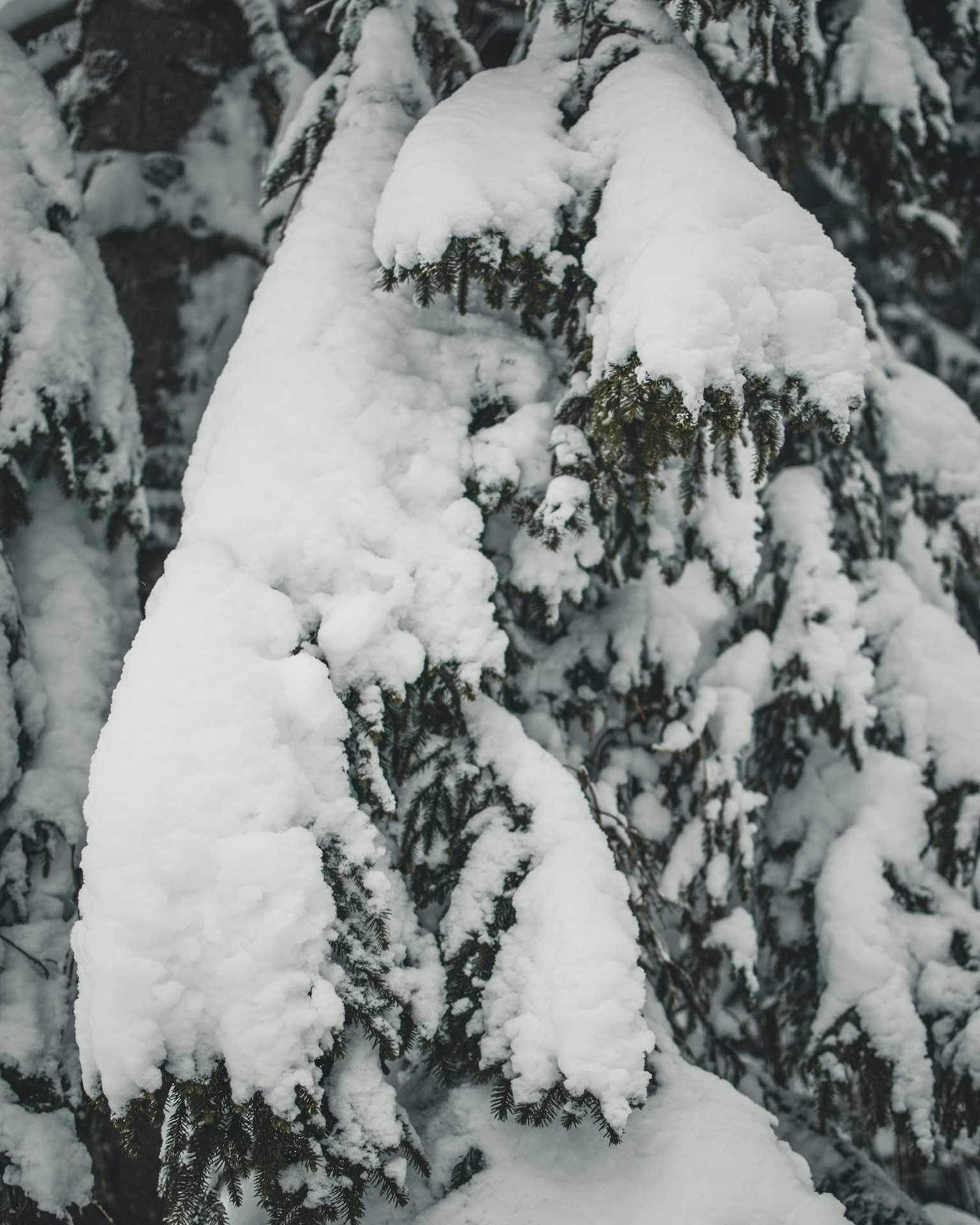 śnieg nachoince