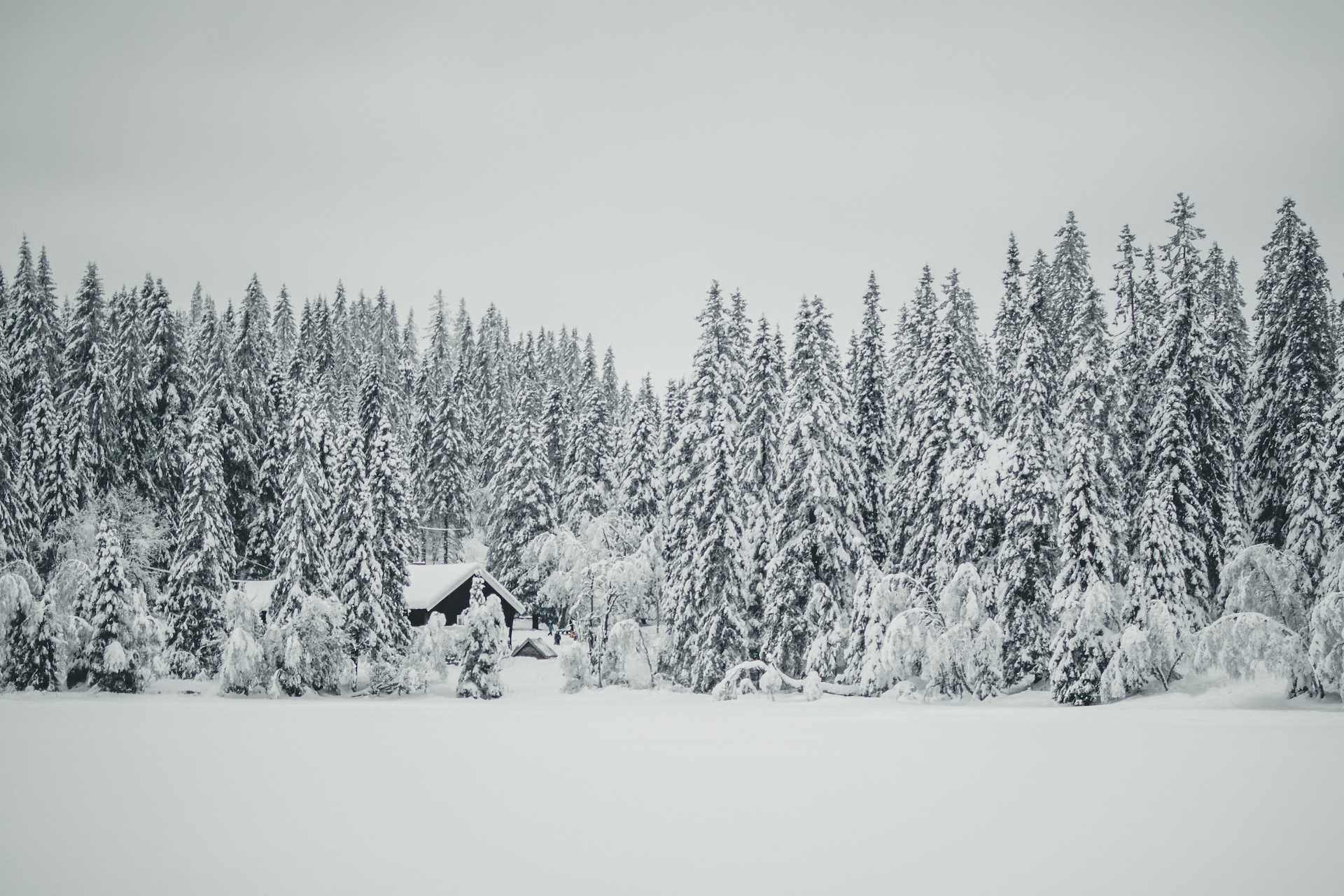zimowe Oslo