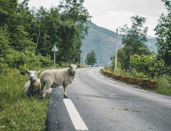 samochody w Norwegii