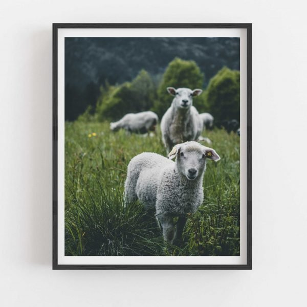 owca wydruk